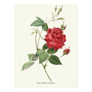 Vintage Red Rose Botanical Print Post Card