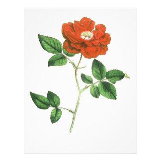 """Vintage Red Rose Illustration 8.5"""" X 11"""" Flyer"""