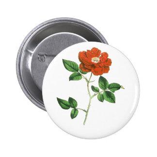 Vintage Red Rose Illustration Pinback Button