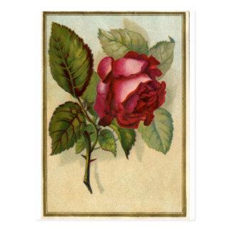 Vintage Red Rose Postcard