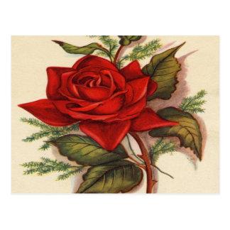 Vintage, Red Rose Postcard