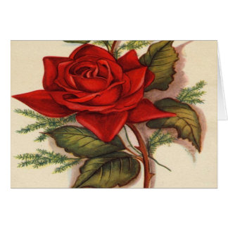 Vintage, Red Rose, Wife Birthday Card