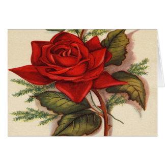 Vintage, Red Rose, Wife Birthday Card