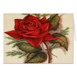 Vintage, Red Rose, Wife Birthday Greeting Card