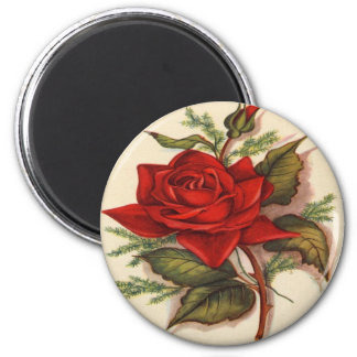 Vintage, Red Rose, Wife Birthday, Magnet