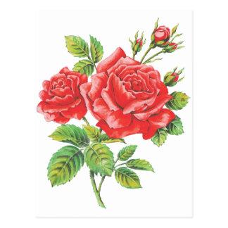Vintage Red Roses Botanical Postcard