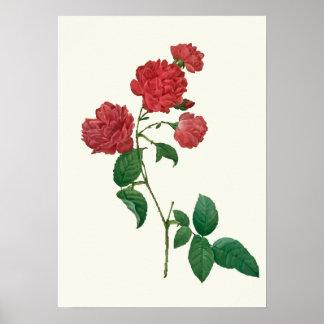 Vintage Red Roses Botanical Print