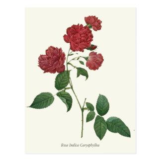 Vintage Red Roses Botanical Print Postcard