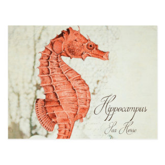 Vintage Red Sea Horse Postcard