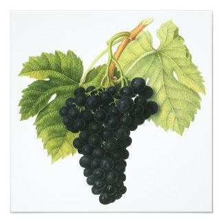Vintage Red Wine Organic Grape Cluster, Food Fruit Card