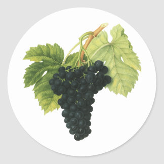Vintage Red Wine Organic Grape Cluster, Food Fruit Classic Round Sticker