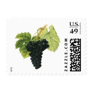 Vintage Red Wine Organic Grape Cluster, Food Fruit Postage Stamp