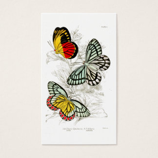 Vintage Red Yellow Butterflies   Vintage Insects Business Card