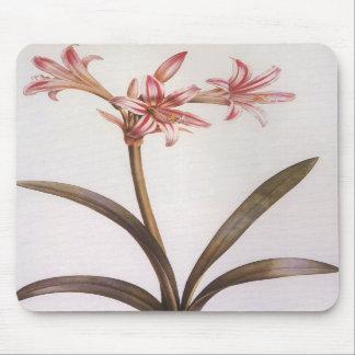 Vintage Redoute Amarillis Vittata flower Mousepad