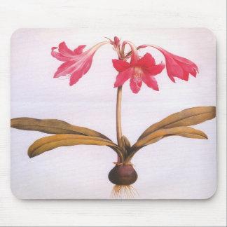 Vintage Redoute Amaryllis Flower Mousepad