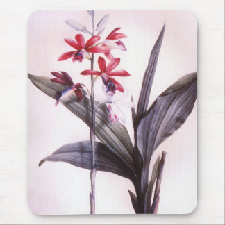 Vintage Redoute Red Orchid Mouse Pad