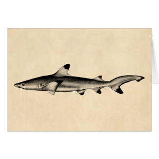 Vintage Reef Shark Illustration - Black Tipped Card