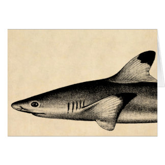 Vintage Reef Shark Illustration Black Tipped Card