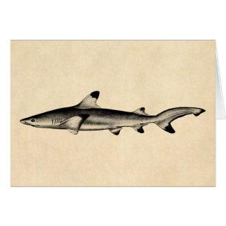 Vintage Reef Shark Illustration - Black Tipped Greeting Card