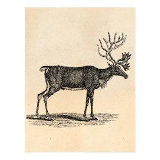 Vintage Reindeer Illustration -1800 s Christmas Postcard