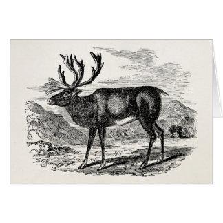 Vintage Reindeer Personalized Deer Illustration Greeting Card
