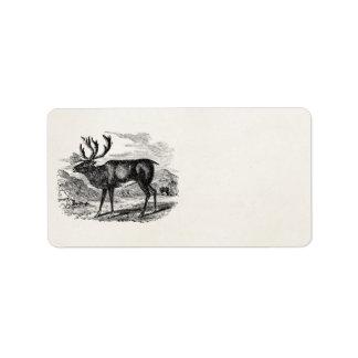 Vintage Reindeer Personalized Deer Illustration Labels