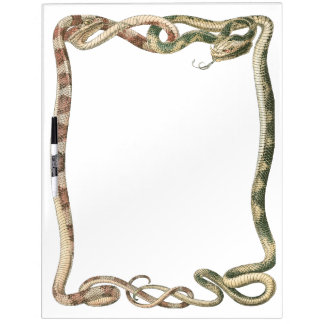 Vintage Reptiles, Vipers Snakes Entwined Border Dry-Erase Boards