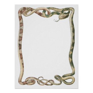 Vintage Reptiles, Vipers Snakes Entwined Border Poster