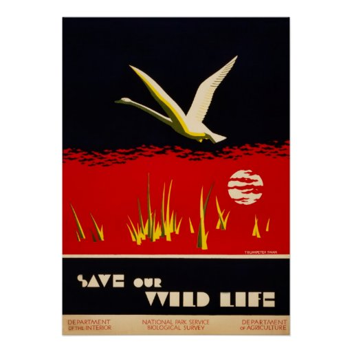Vintage restored save our wild life trumpeter swan posters