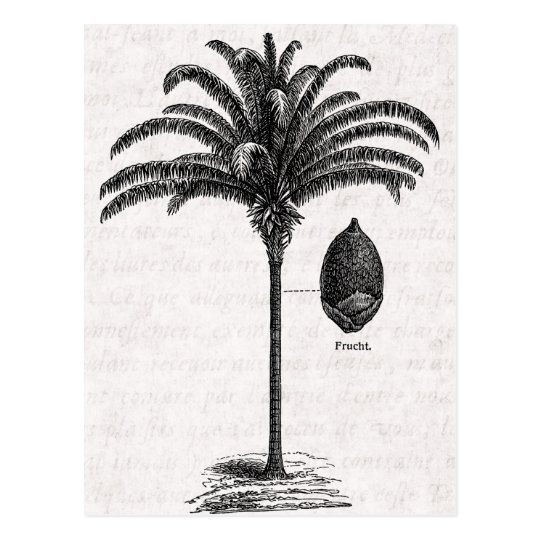 vintage retro brazilian palm tree template palms postcard zazzle com