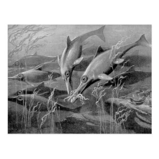 Vintage retro ichthyosaur black and white picture postcard