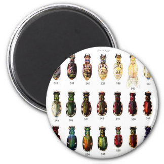 Vintage Retro Kitsch Insects Bettles Illustration 2 Inch Round Magnet