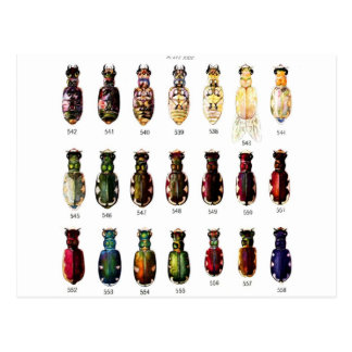 Vintage Retro Kitsch Insects Bettles Illustration Postcard