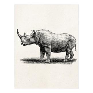 Vintage Rhinoceros Illustration Rhino Rhinos Postcard