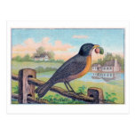 Vintage Robin Birthday Postcard