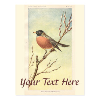 Vintage Robin Postcard