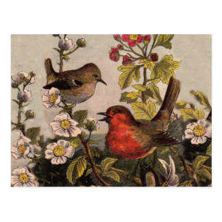 Vintage Robins for Bird Lovers Post Card