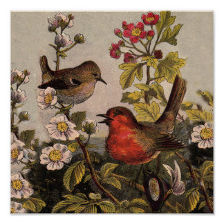 Vintage Robins for Bird Lovers Poster