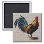Vintage Rooster and Antique Text Collage - Custom 2 Inch Square Magnet