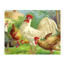 Vintage Rooster and Chickens Postcard