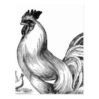 Vintage rooster illustration postcard