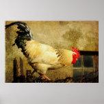 Vintage Rooster Posters