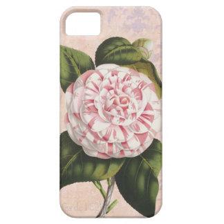Vintage rosado y blanco elegante del damasco de la iPhone 5 carcasas