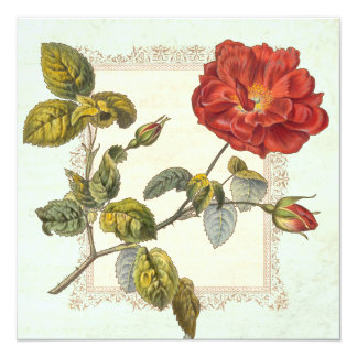 Vintage Rose Botanical Birthday Garden Party Card