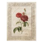 Vintage Rose II postcard