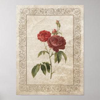 Vintage Rose II poster