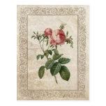 Vintage Rose III postcard