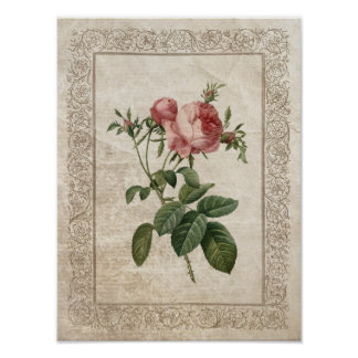 Vintage Rose III poster