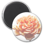 Vintage Rose Magnet
