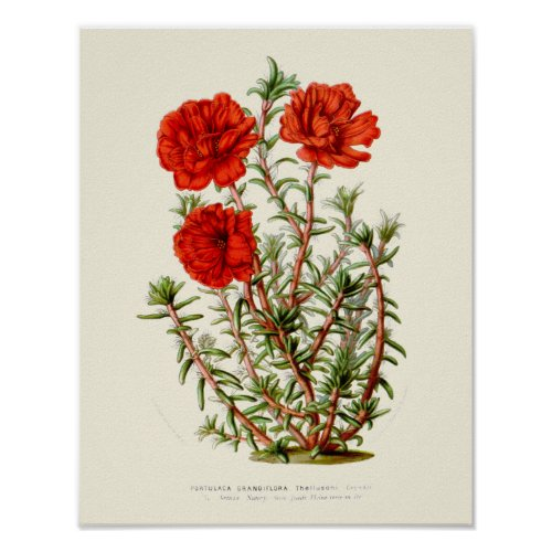 Vintage Rose Moss Botanical Print